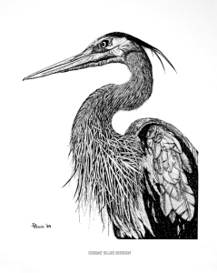 great-blue-heron-drawing